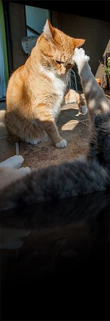 iCanHaz Battle Cat Action And Or Photos