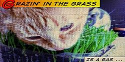 Grazin' in the grass is a gas ... baby can you dig it! 16