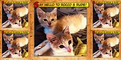 Say Hello To Rocco & Rudie 5