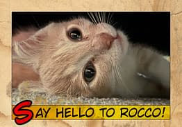 Say Hello To Rocco & Rudie 04