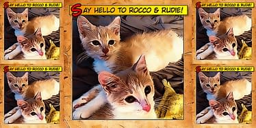 Say Hello To Rocco & Rudie 16